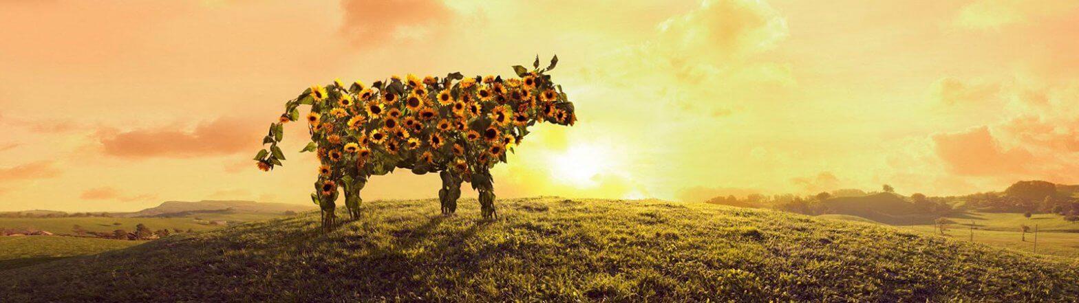 Kuh aus Sonnenblumen auf Wiese